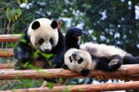 10-Day Best of China with Pandas Private Tour: Beijing, Xian, Chengdu and Shanghai