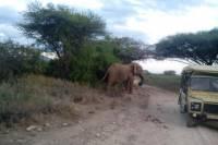 12 days Kenya and Tanzania Safari from Nairobi