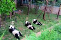 13-Day Grand China with Pandas Join-in Tour: Beijing, Xian, Chengdu, Yangtze River Cruise and Shanghai