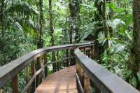 2-Day Cinco Ceibas Rainforest Tour from San Jose
