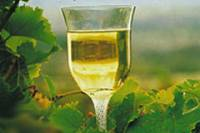 2-Day Margaret River Wine Experience Tour from Perth
