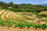Wine Country and Muir Woods Small-Group Tour from San Francisco (Day Trips from SF)