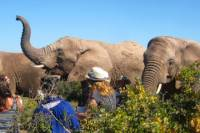 2-Day South African Wildlife Safari from Cape Town