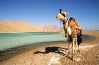 2-Hour Camel Safari to Wadi Bida or Blue Lagoon from Dahab