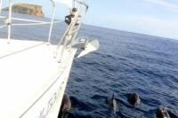 2 Hour Sailing Trip