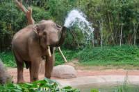 2-Night Chiang Mai Tour Including Elephant Nature Park