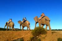 3-Day Garden Route Tour from Cape Town with Big Five Game Drive