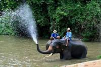 3-Day Lampang Tour with Thai Elephant Conservation Center Homestay Experience