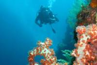 3-Day PADI Open Water 18-Meter Certification Course in Bali
