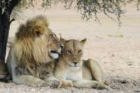 3-Day Private Garden Route Tour from Cape Town with Big Five Game Drive