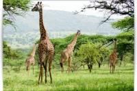 3 Days and 2 Nights Budget Camping Safari: Lake Manyara, Ngorongoro Crater and Tarangire