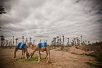 3-Hour Palm Grove Camel Ride Excursion in Marrakech