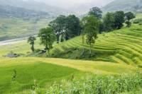 3-Night Sapa and Muong Hoa Valley Trekking Tour from Hanoi