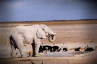 4-Day Etosha And Swakopmund Adventure from Windhoek