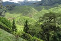 4-Day Highlights of Malaysia Tour from Kuala Lumpur to Penang