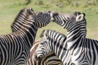 4-Day Kruger Park Safari Tour from Pretoria