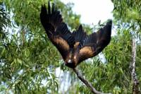 5-Day Cunnamulla Outback Wildlife Backpacking Tour from Brisbane