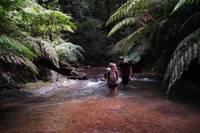 5-Day Wild Jungle Ranger Adventure Tour from Bangkok