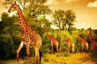 5 Days Safari In Tarangire, Lake Manyara, Ngorongoro and Serengeti NP From Arusha Town