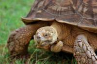5-Night Galapagos Tour from Quito including 3-Night Island and Wildlife Cruise