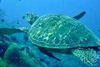 6-Day Bohol Scuba Dive Package from Cebu