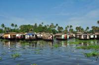 6-Day Private Tour: Periyar Wildlife Sanctuary and Backwater Houseboat Cruise in Kerala