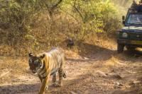 6-Night Golden Triangle Private Tour and Ranthambore Wildlife Safari from Delhi