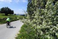 7-Day Sicily Bike Tour of the Baroque Hill Towns from Palazzolo