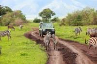7 Days Tanzania Backpackers Safaris