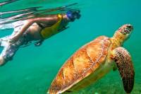 From Riviera Maya Visit a Cenote and Swim with Turtles in Akumal