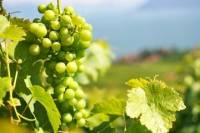 A Passion For Wine - Private Wine Tour to Azeitao