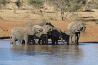 Addo Elephant National Park Day Trip from Port Elizabeth