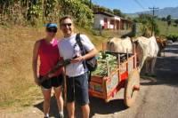 Adventure Transfer from San Jose to Arenal: Coffee Tour, Poas Volcano and La Paz Waterfall Gardens