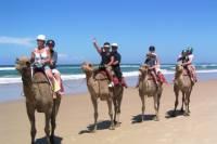 Agadir 2 Hour Camel Riding
