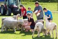 Agrodome Sheep Show and Farm Tour
