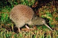 Akaroa Shore Excursion: Banks Peninsula, Christchurch City Tour and Willowbank Wildlife Reserve