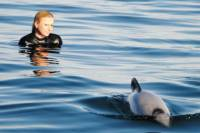 Akaroa Shore Excursion: Swim with Dolphins in Akaroa Harbour