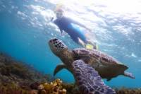 Akumal Sea Turtle Snorkeling Tour from Playa del Carmen