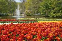 Amsterdam Combo: Skip-the-Line Keukenhof Gardens and Van Gogh Museum with Canal Cruise