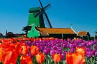 Amsterdam Super Saver 3: City Tour, Zaanse Schans Windmills, Volendam and Marken Day Trip