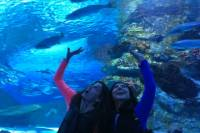 Antalya Aquarium including Hotel Pick up