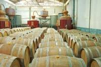 Appleton Estate Rum Tour from Negril