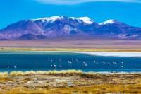 Atacama Salt Flat Day Trip from San Pedro de Atacama including Los Flamencos National Reserve and Socaire Village