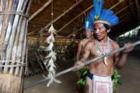 Ayahuasca Ceremony in Manaus