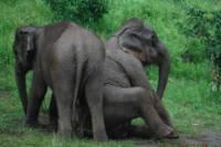 Baanchang Elephant Park from Chiang Mai