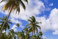Bahamas East End and Lucayan National Park Tour