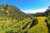 Bali Day Tour of Sunrise Watch at Kintamani, Lemukih Rice Field and Sekumpul Waterfalls