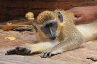 Barbados Wildlife Reserve, Harrison's Cave and Scenic Drive Tour