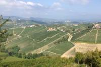 Barbaresco Guided Hike Including Lunch and Wines