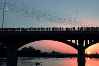 Bat Bridge Kayak Tour in Austin